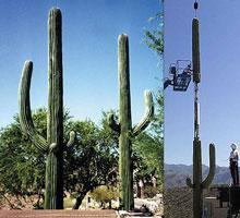 antenna in cactus