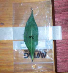 test leaf in bag